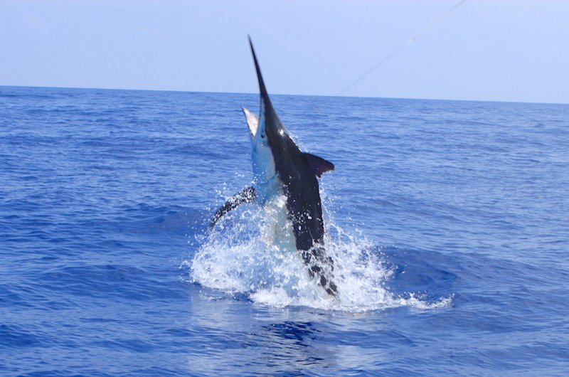 Exmouth Game fishing marlin
